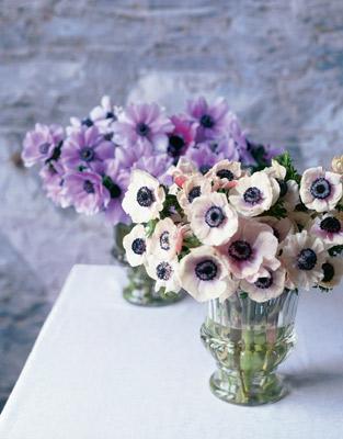 Anemones Ranunculus Flirty Fleurs The Florist Blog