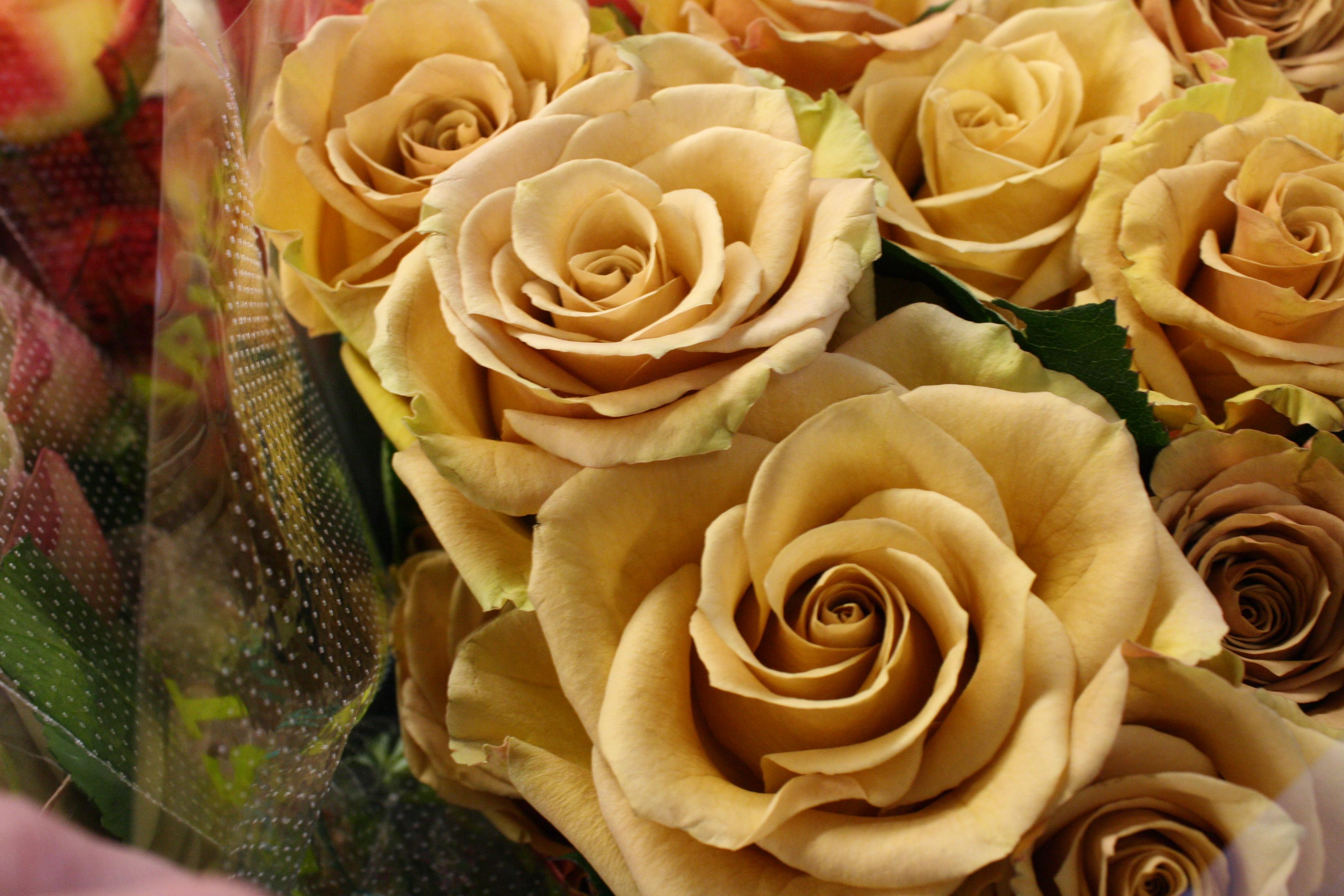 a rose by harvest flirty fleurs the florist blog inspiration for floral designers. Black Bedroom Furniture Sets. Home Design Ideas