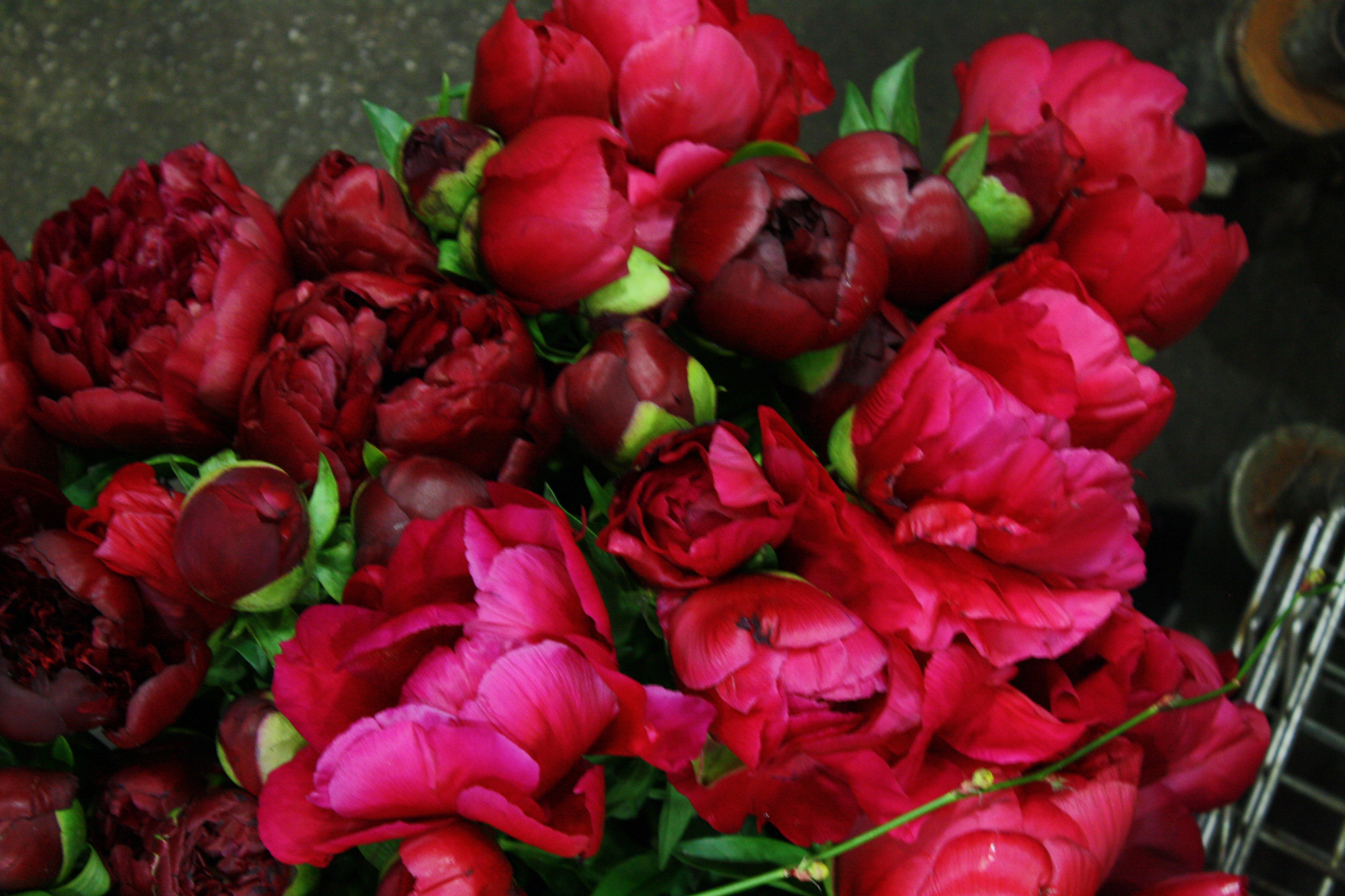 g page wholesale flowers