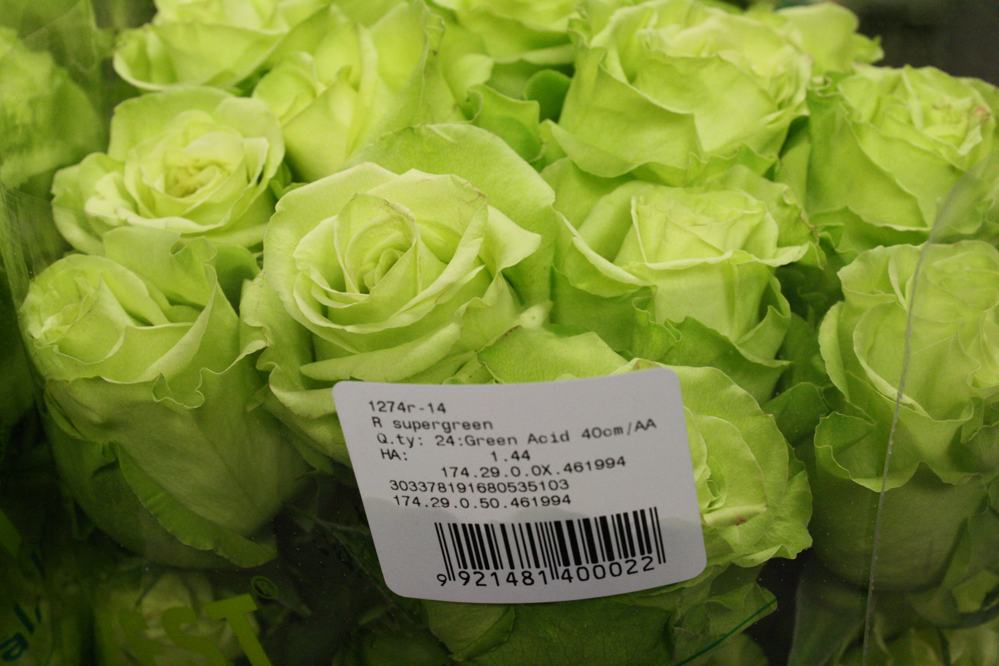 Роза супер грин фото 3