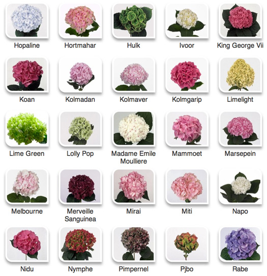 The gallery for types of flowers with names and meanings for Kinds of flowers with name and picture