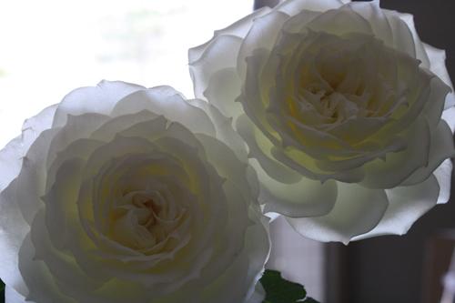 Etonnant Flirty Fleurs