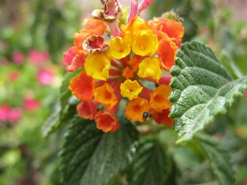 flowers of peru flirty fleurs the florist blog inspiration for