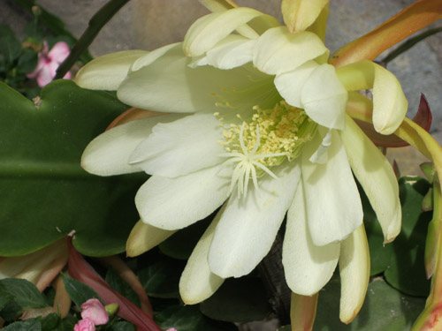 Flowers of peru flirty fleurs the florist blog inspiration for pretty white flower not sure what it is mightylinksfo