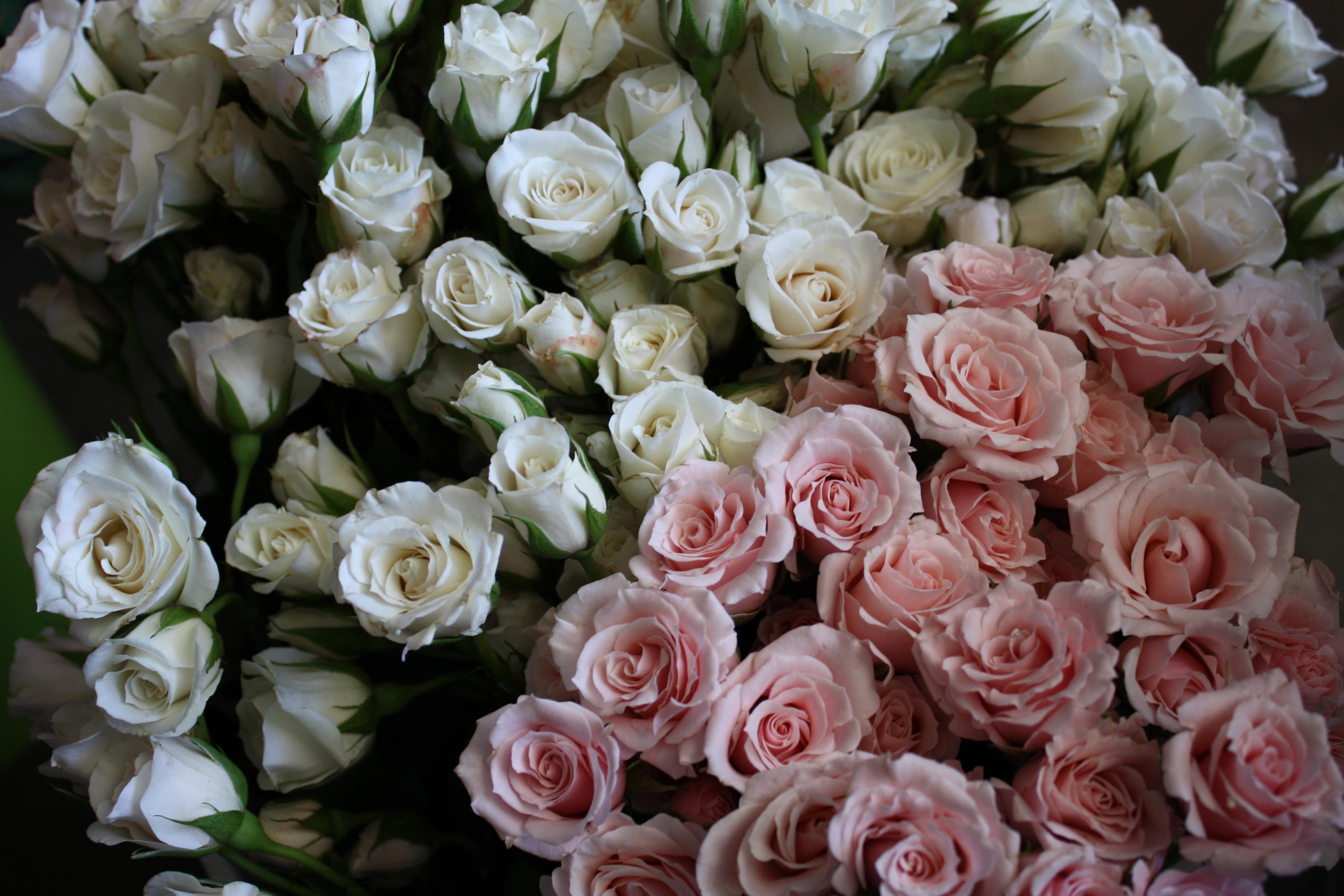Flower guide flirty fleurs the florist blog inspiration for spray roses mightylinksfo