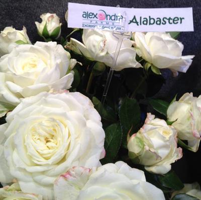 Alexandria Roses Alabaster ...