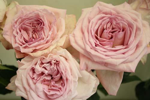 Pink ...