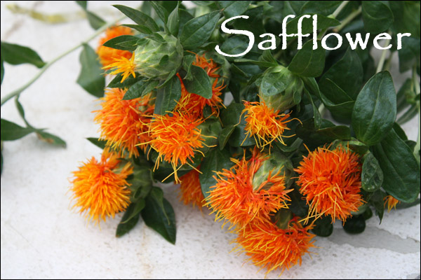 orange safflower flower, floral design