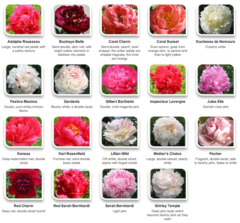 flower pictures and names list, Natural flower