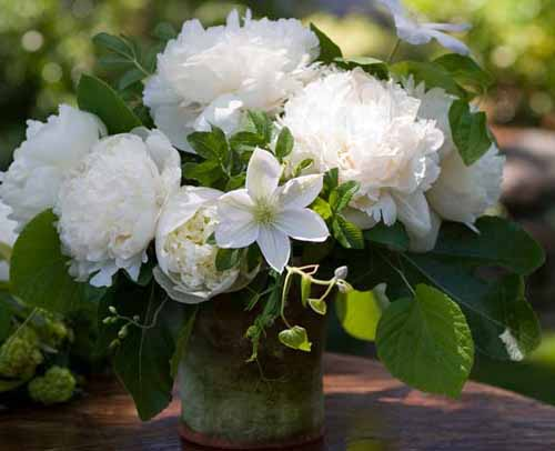 white peonies and clematis