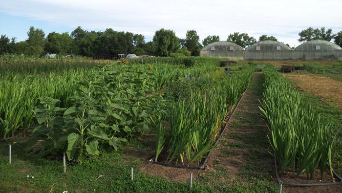 organic flower farm Colorado