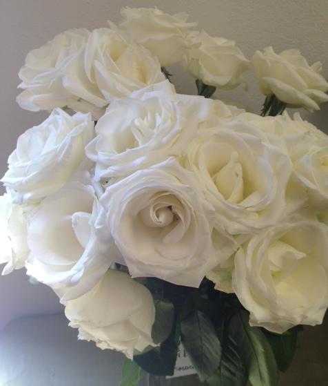 Tibet White Rose