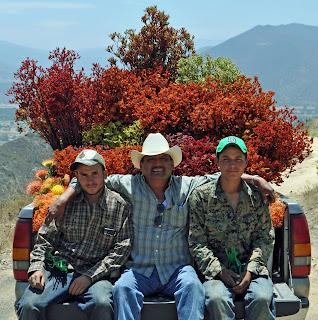 Protea farmers