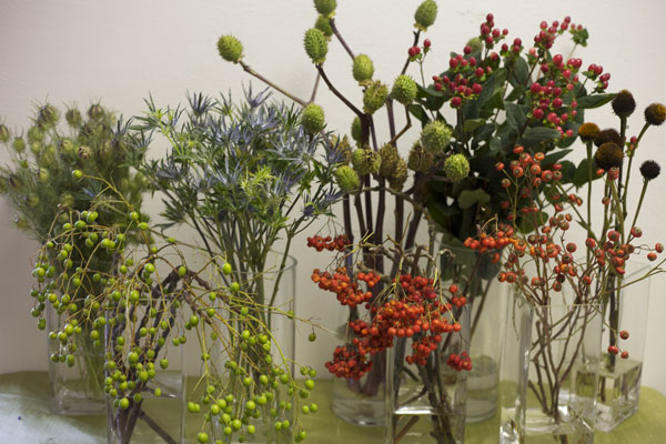 blue thistle, datura pods, rose hips, hypericum, china berries, mountain ash berries, love in the mist pods, nigella pods