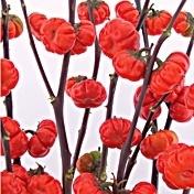 Pumpkin Tree for floral designs