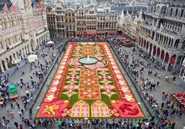 flower carpet of begonias