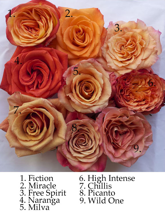 types of orange roses