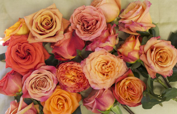 Orange Roses by Harvest Wholesale Roses