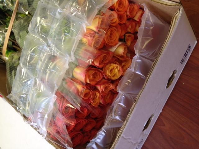 orange roses by Harvest Wholesale