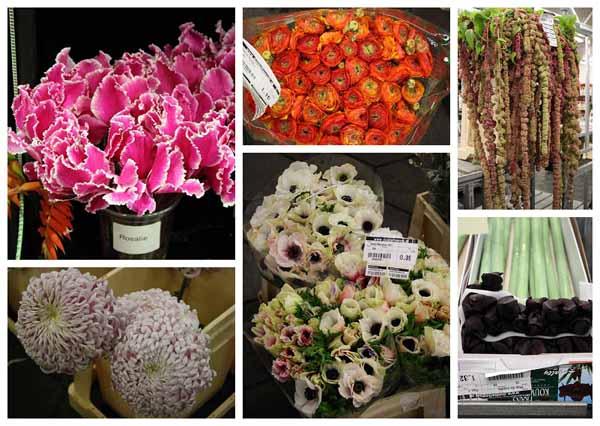cyclamen, ranunculus, hanging amaranthus, mums, anemones, amaryllis