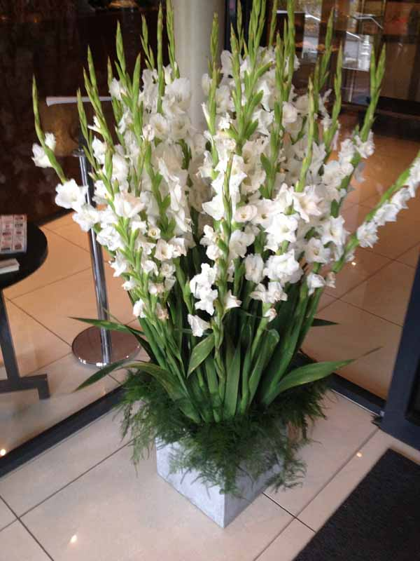 white gladiolas arrangement