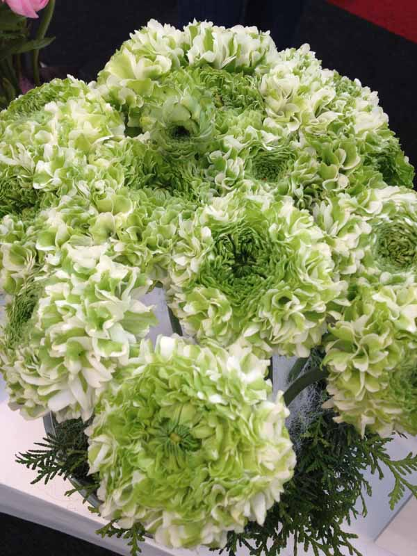 green and white ranunculus