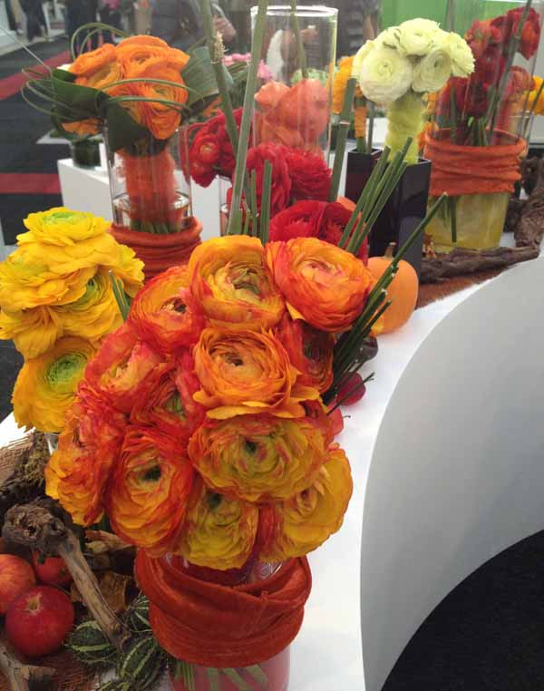 orange and yellow ranunculus