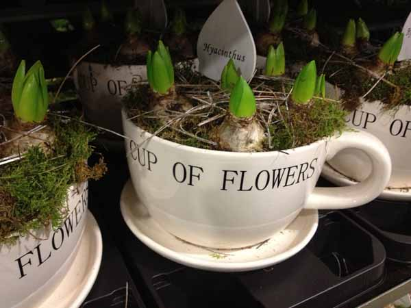 cup of flowers filled with bulbs