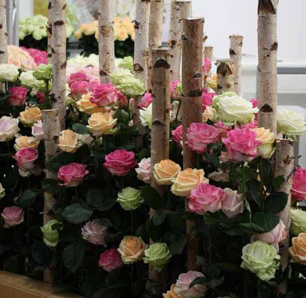 roses and birch arrangement