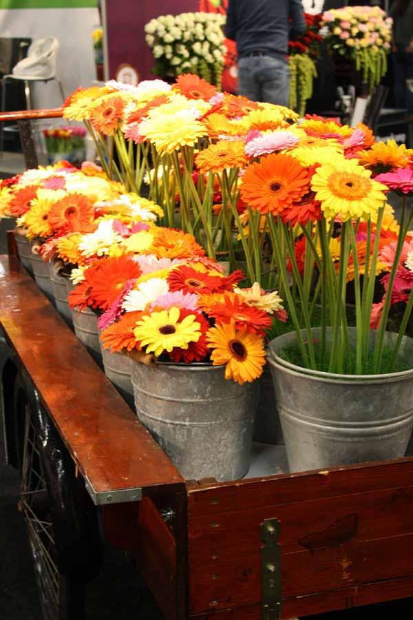 gerbera daisy display