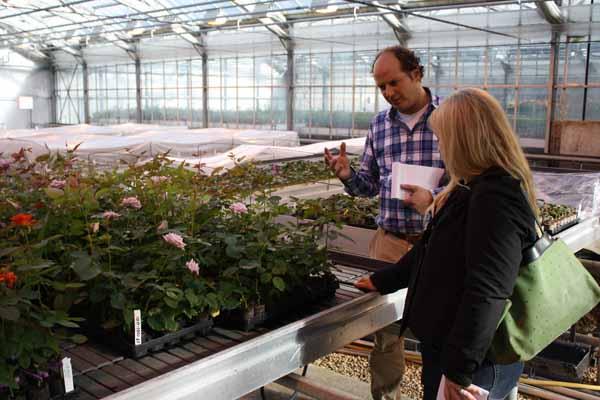 de Ruiter rose breeders