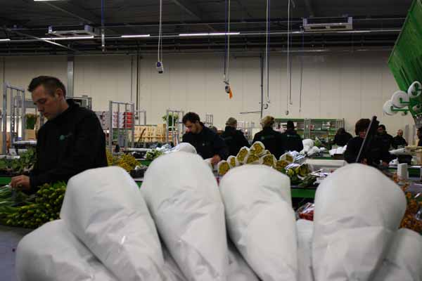 employees of Holex packing flowers