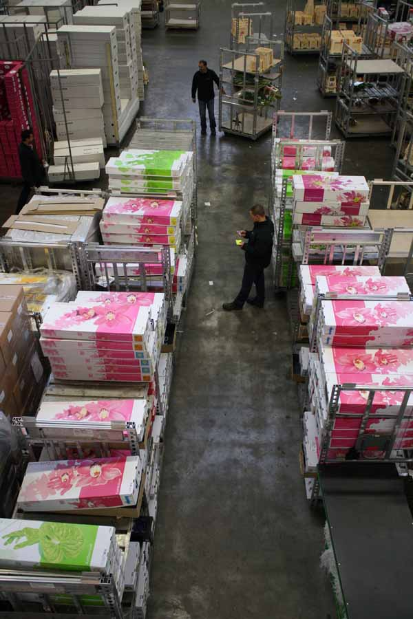 shipping orchids